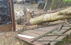 Copac prăbușit pe o stradă din Cătămărăști Deal – FOTO