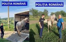 Un cal bătut cu cruzime de stăpân a fost salvat de polițiști