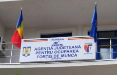3.079 persoane angajate prin intermediul AJOFM Botoșani în perioada ianuarie-mai 2021