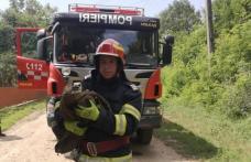 Acțiune inedită a pompierilor dorohoieni: Pui de barză salvat după ce s-a rănit la un picior - FOTO