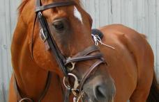 Fetiță de 10 ani, din județul Botoșani, ajunsă la spital după ce a fost mușcată de un cal
