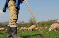 Soți botoșăneni ajunși la spital după ce au fost luați la bătaie pe un câmp de trei ciobani