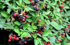 Fructele care ne mențin tineri