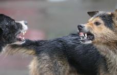 Primim la redacție – Întâlnire de gradul zero în Dorohoi cu patru câini