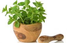 Mirodeniile care aduc o serie de beneficii organismului