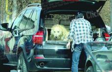 Andreea Marin şi-a luat copiii, Bănică jr. - câinele!