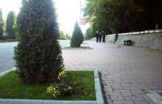 Spaţii verzi vandalizate in Dorohoi