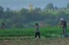 Şapte copii români, sclavi la o fermă din Marea Britanie