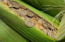 Agricultorii români vor primi subvenţii pentru culturi bio