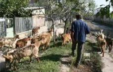 În câteva zile va începe recensământul agricol în Dorohoi