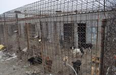 Proiect de gestionare a cainilor fara stapan