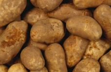 Bulgari de cartofi