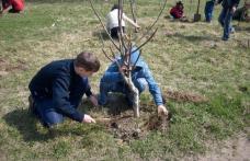 România verde… Sărbătoarea sădirii arborilor