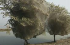 Copaci acoperiţi în întregime cu pânză de păianjen într-o regiune din Pakistan