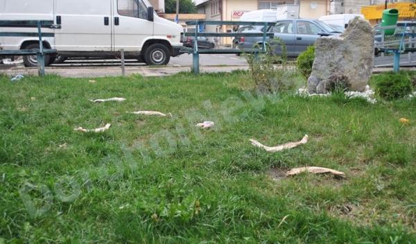 Fosilele unor animale preistorice in parc_Dorohoi_01