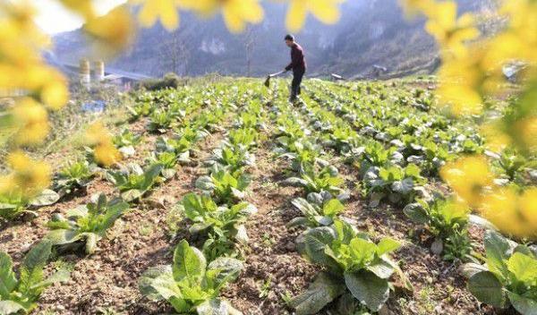 Vești bune pentru micii fermieri