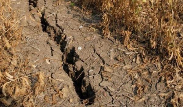 botosani-judet-afectat-de-seceta-severa
