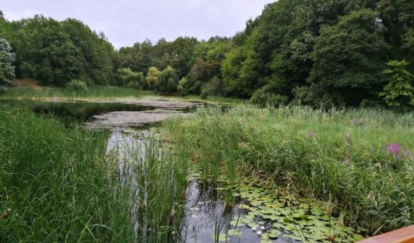 poze lacul cu nuferi3