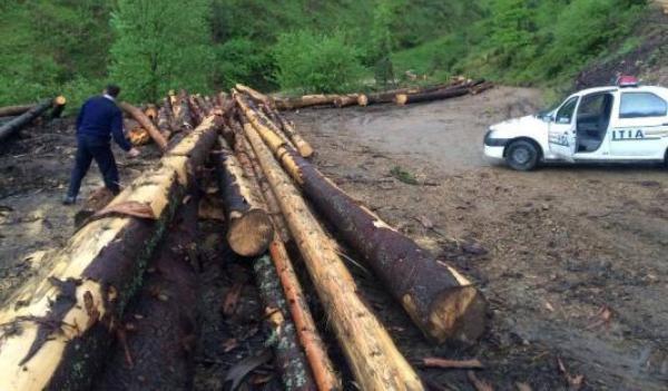 lemn-confiscat-de-politistii