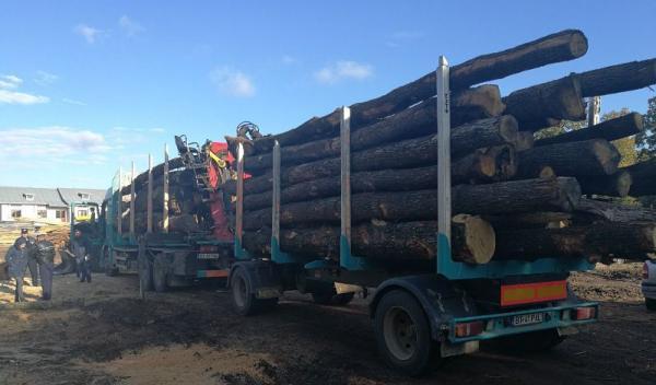 lemne fara acte 2