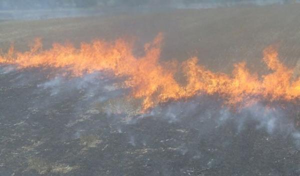 Incendii miristi