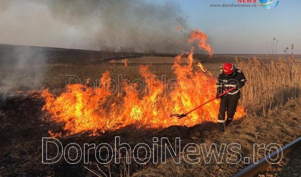 Incendiu vegetatie Dorohoi_03