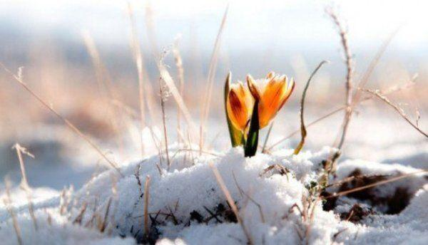 primavara-floare