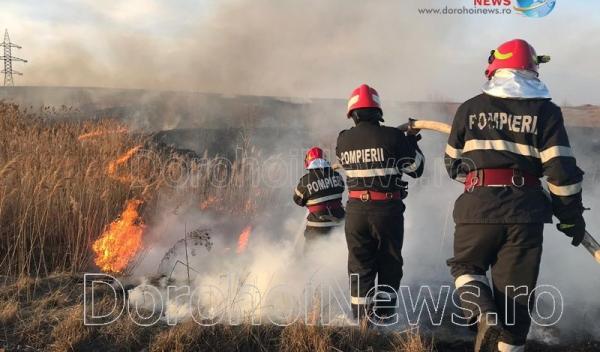 Incendiu vegetatie Dorohoi_24