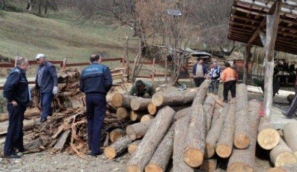 mafia_lemnului