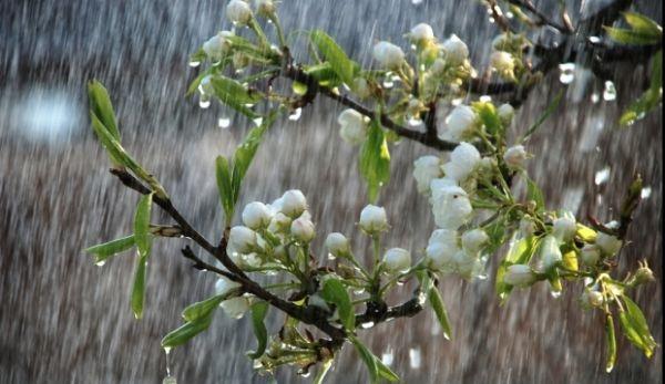 ploaie-primavara