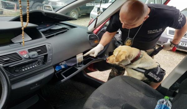 Canabis descoperit de cainele politist Sheba