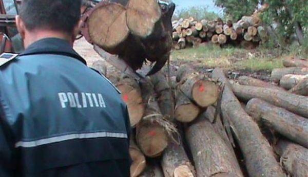 lemne ilegale