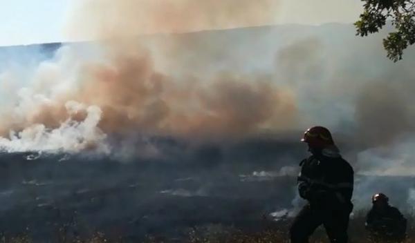 Incendiu vegetatie_1