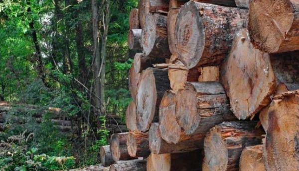 licitatie-masa-lemnoasa