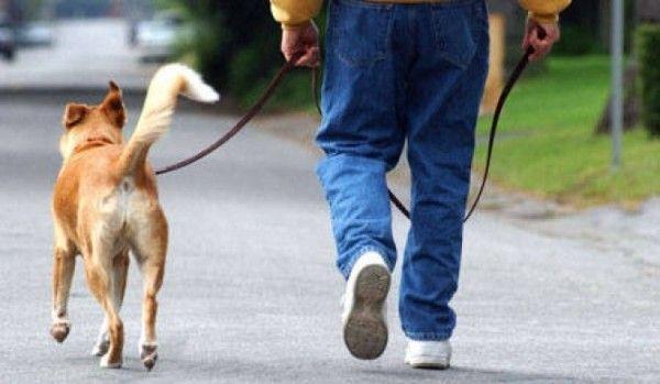 plimbare caine