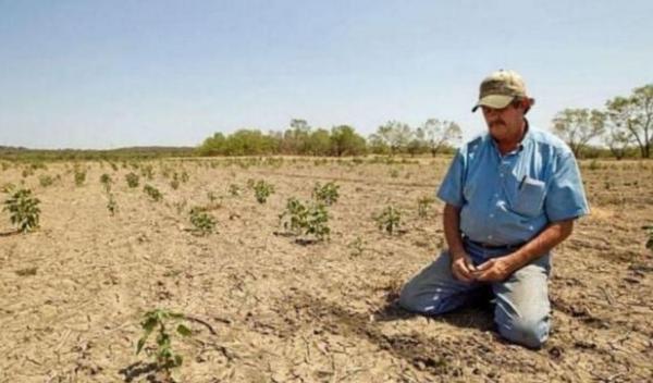 agricultura-seceta-teren-despagubiri