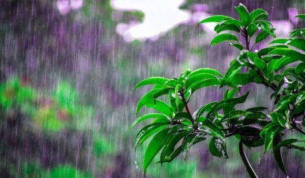 vremea-ploi