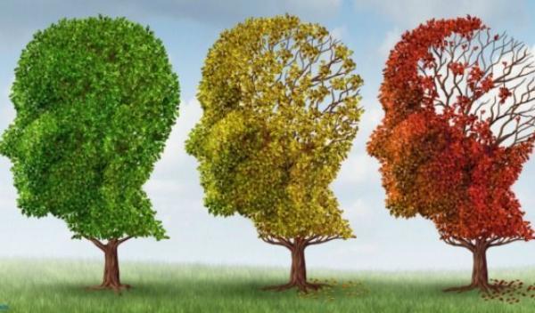 15-remedii-naturiste-pentru-o-memorie-de-geniu