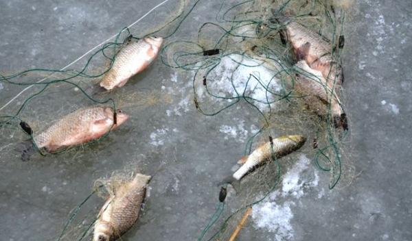 Branconaj piscicol