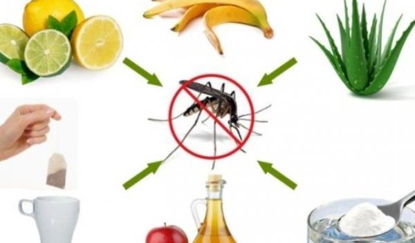 remedii-naturale-pentru-muscaturile-de-tantari