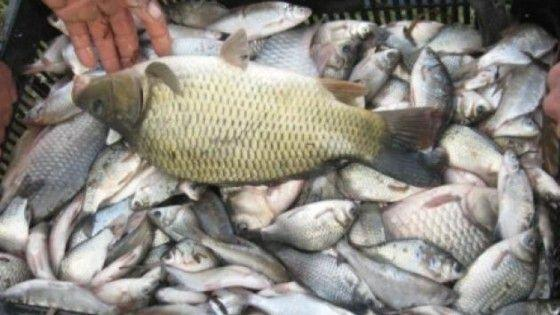 transport ilegal de pește